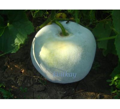 Бенінказа (зимовий гарбуз), насіння ( Benincasa hispida)