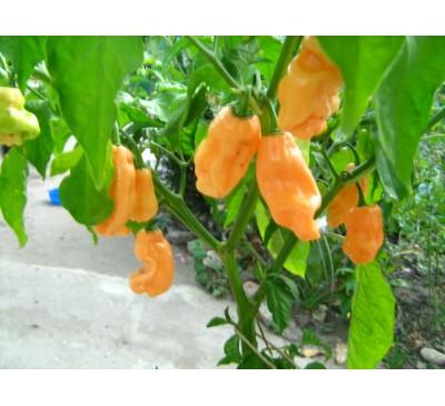 Насіння перцю гострого  Habanero Peach