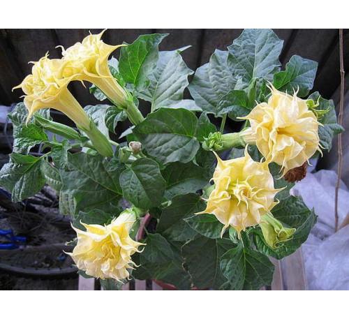 Комнатные цветы: каталог с фотографиями и названиями